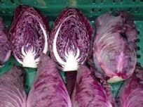 Cabbage F1 Redruth